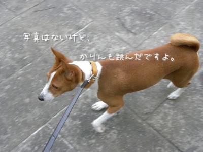 DSCN0459_convert_20120910184703.jpg