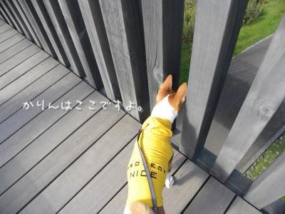 DSCN0597_convert_20121010203716.jpg
