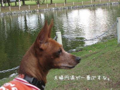 IMG_8438_convert_20121024221634.jpg
