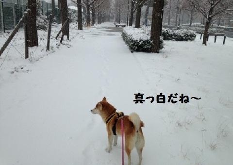 お散歩ロード