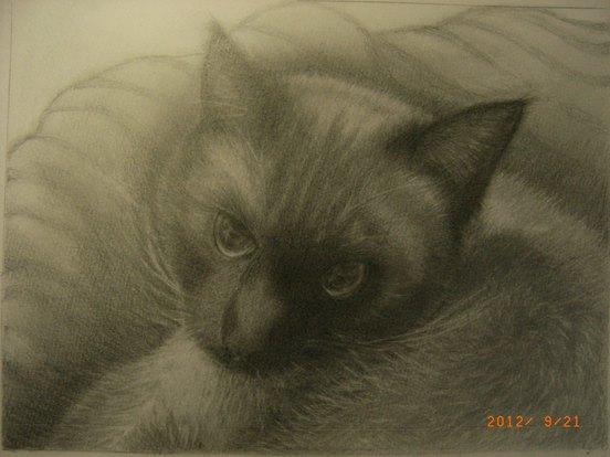 Fさん猫のデッサン