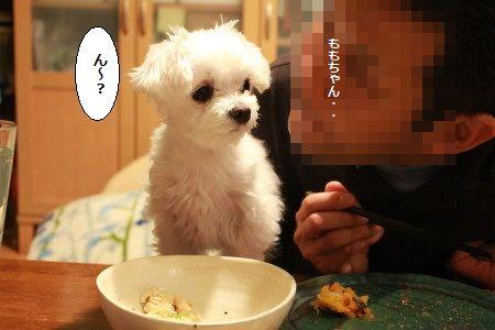 IMG_1527_1ん~?1
