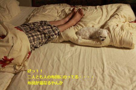 IMG_4520_1むくい620