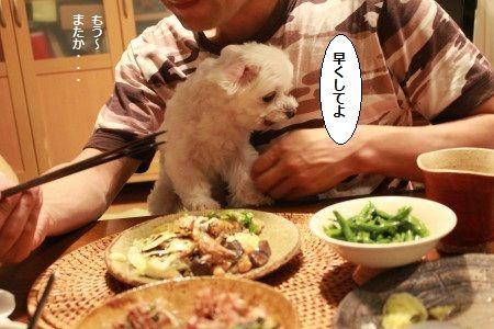 IMG_5432_1hayaku~713122