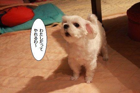IMG_0042_1watasimoikeru123.jpg