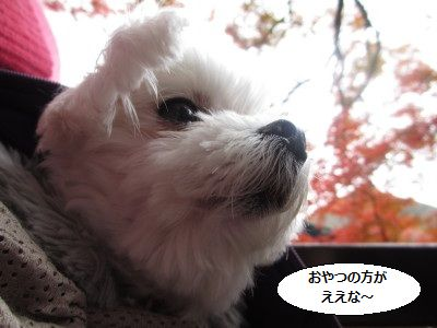 IMG_0174_1oyatuno11022147.jpg