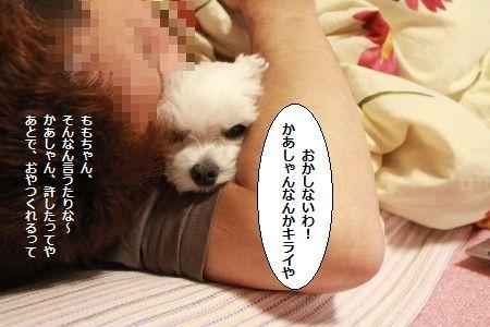 IMG_0403_1seyakate10288123.jpg