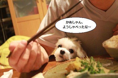 IMG_0738_1yousyaberu1101278.jpg