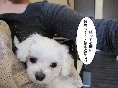 IMG_0960_1kaami1.jpg