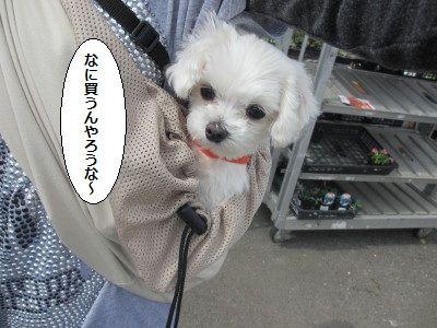 IMG_1356_1nanikau1.jpg