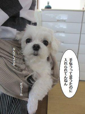 IMG_1462_1nanndesyou1.jpg