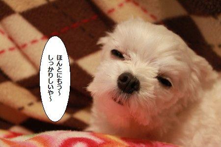 IMG_1485_1sonnnakotoyakara113000789.jpg
