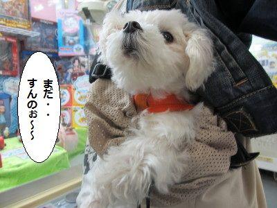 IMG_1545_1madasuru1.jpg