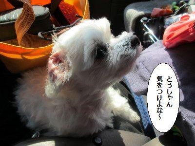 IMG_1643_1toukiwo1.jpg