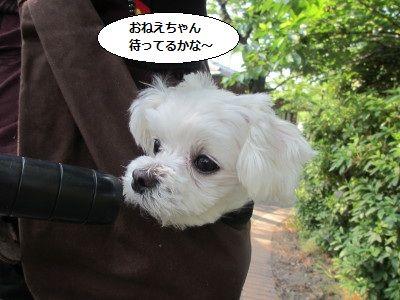 IMG_1683_1momoimakara1.jpg