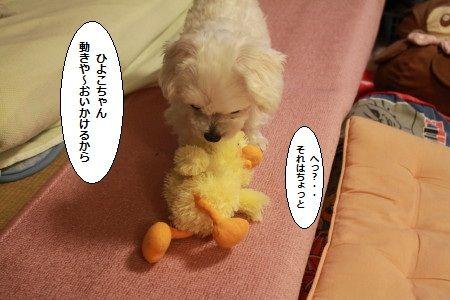 IMG_1920_1hiyokougoki20122121199.jpg