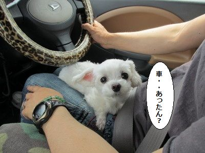 IMG_1969_1kyoumokuruma6171.jpg