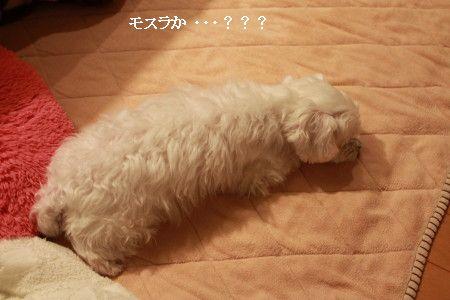 IMG_2087_1daisukimomo1.jpg
