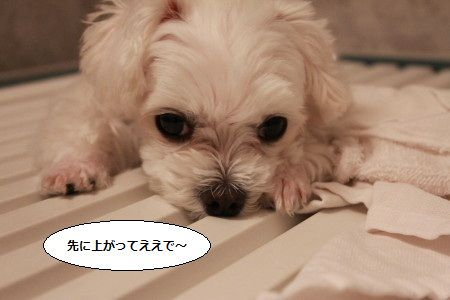 IMG_2108_1saki11.jpg