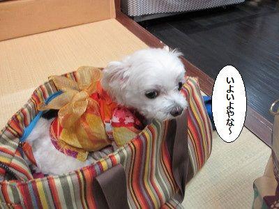 IMG_2276_1iyoiyoyana71411.jpg