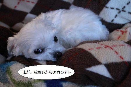 IMG_2297_1mada2.jpg