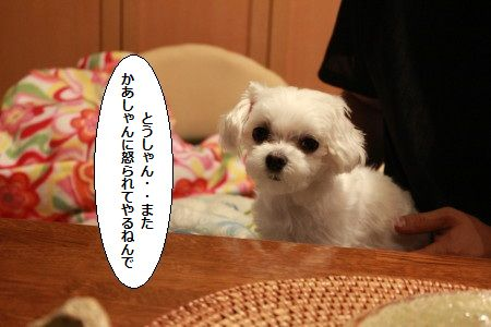 IMG_2538_1toumatasipp1.jpg