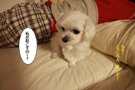 IMG_2562_1watasigaoko1.jpg