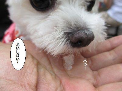 IMG_2788_1oisinai81899.jpg