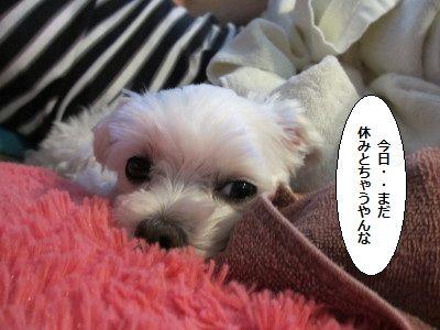 IMG_3035_1madayasumi8300123.jpg