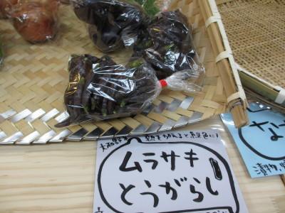 IMG_3350_1murasaki902000.jpg