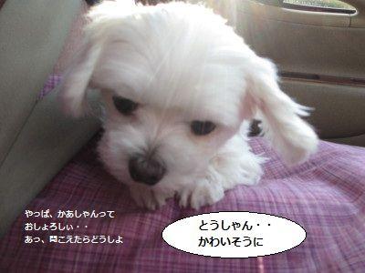 IMG_3634_1iryoku10078123.jpg