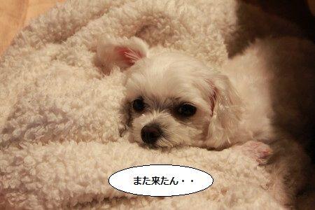 IMG_4068_1matakita69112.jpg