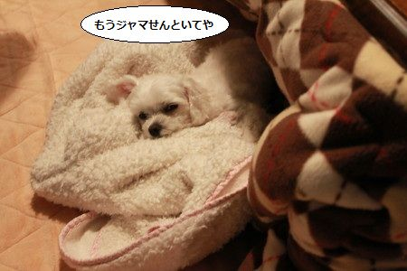 IMG_4074_1mouxyama69112.jpg