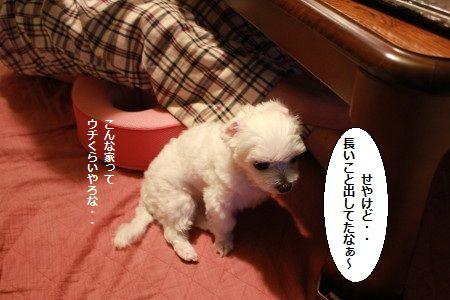 IMG_4973_1nagaikoto55.jpg