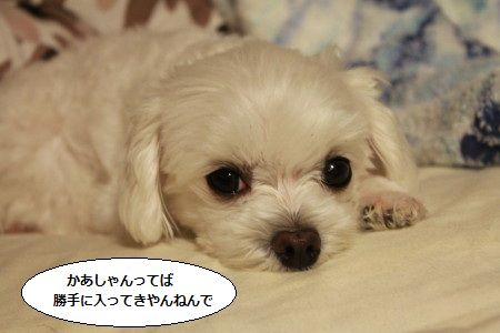 IMG_5078_1kamatte77.jpg