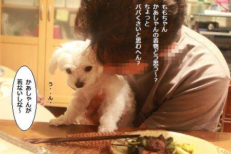 IMG_6458_1wakakuha731155.jpg