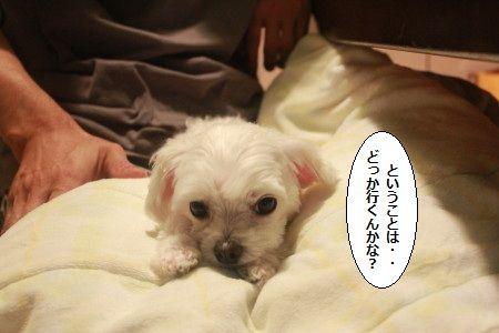 IMG_6969_1dokoiku810132.jpg