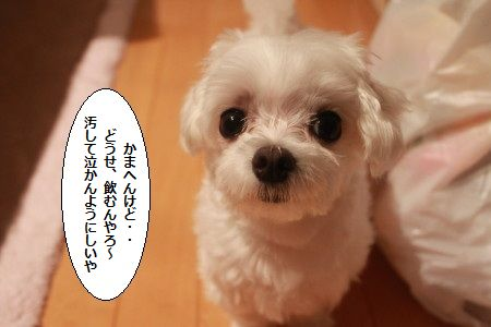IMG_7007_1yogosite801033.jpg