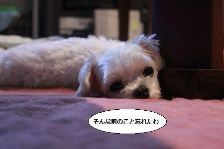 IMG_7876_1maewasu83119789.jpg