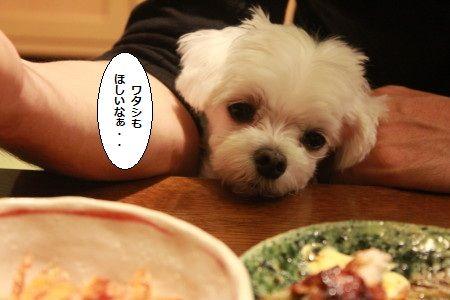 IMG_8977_1watasimohosii902333123.jpg