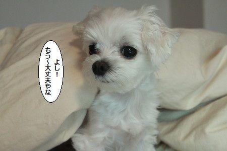 IMG_9103_1yosidaizyoubu902669123.jpg