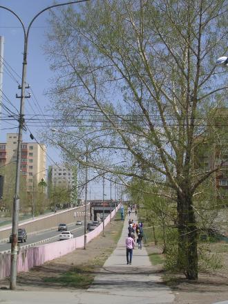 Streettree