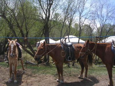 HorseRidinginMongolia11