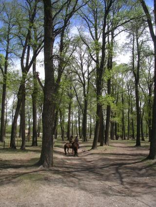 HorseRidinginMongolia