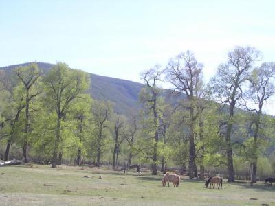 HorseRidinginMongolia9