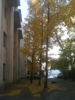 Autumn12_5