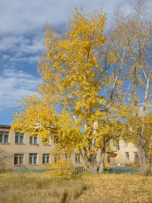 Autumn12_4