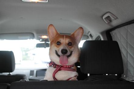 ドライブさいこー!