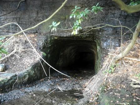 森のたね 三浦半島 防空壕