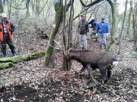 森のたね 狩猟 人材育成